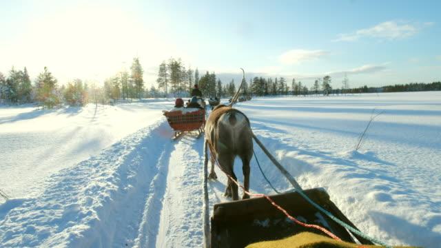 reindeer sleigh ride - дикая местность стоковые видео и кадры b-roll