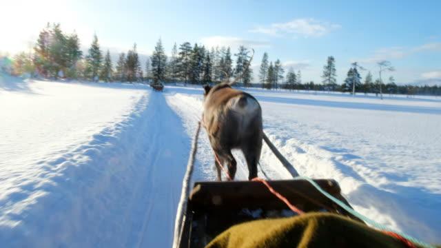 stockvideo's en b-roll-footage met rendieren sleigh ride - rendier
