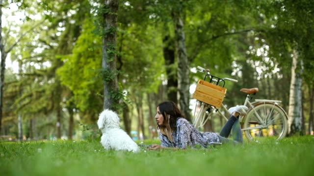 koppla av på picknick dag med söt maltesiska dog - ligga på mage bildbanksvideor och videomaterial från bakom kulisserna