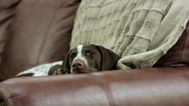 från soffan - läder bildbanksvideor och videomaterial från bakom kulisserna