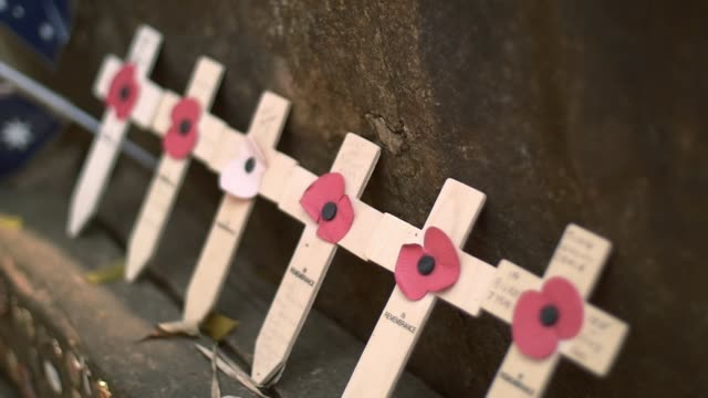 A remembrance day poppies on wooden crosses of Australia and newsealand soilder video