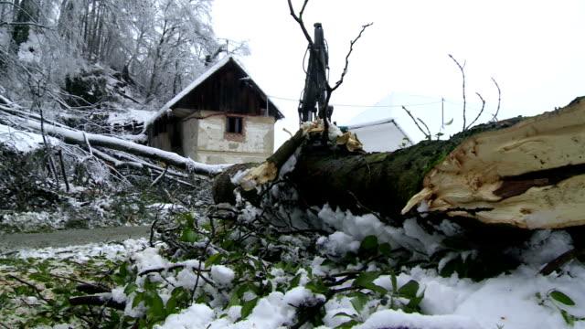 rimozione di alberi spezzati sinistra, nevischio - fronda video stock e b–roll