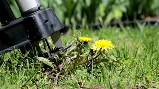 芝生たんぽぽから削除 - 自生点の映像素材/bロール