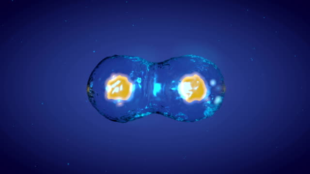 3D Rendering of Dividing Cell Process video