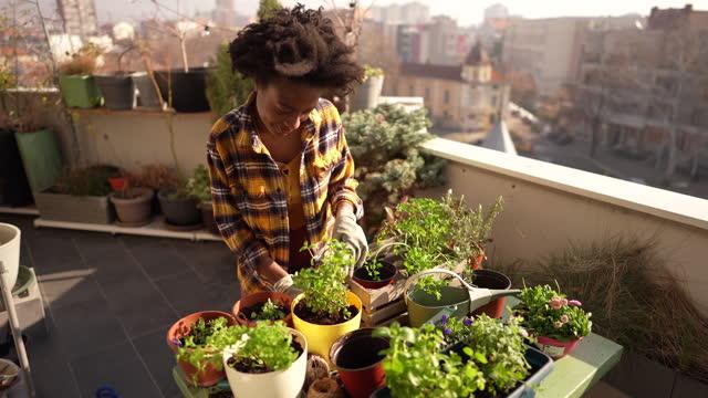 vídeos de stock, filmes e b-roll de repotando minhas plantas - jardinagem