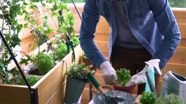 umtopfen - urban gardening stock-videos und b-roll-filmmaterial