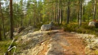 istock Repovesi National Park, Finland. Walking in wonderful serene autumn pine scandinavian forest lit by setting sun. Steadicam shot, 4K 1195781112
