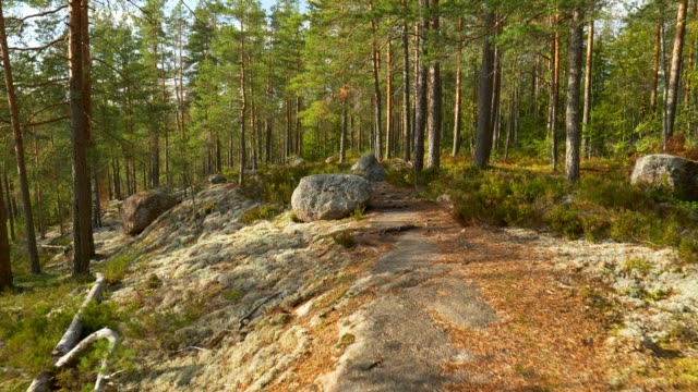 vídeos de stock e filmes b-roll de repovesi national park, finland. walking in wonderful serene autumn pine scandinavian forest lit by setting sun. steadicam shot, 4k - estrada em terra batida