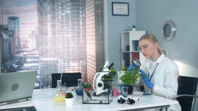 vídeos de stock, filmes e b-roll de cientista da pesquisa na aprendizagem dos vidros de segurança a lupa a planta sae da estrutura - amostra científica