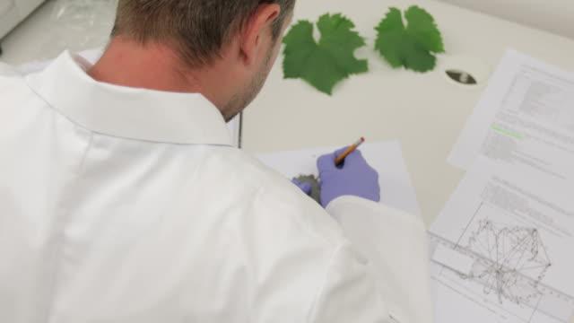 つるを測定研究員葉つる型の比較 - ぶどう イラスト点の映像素材/bロール