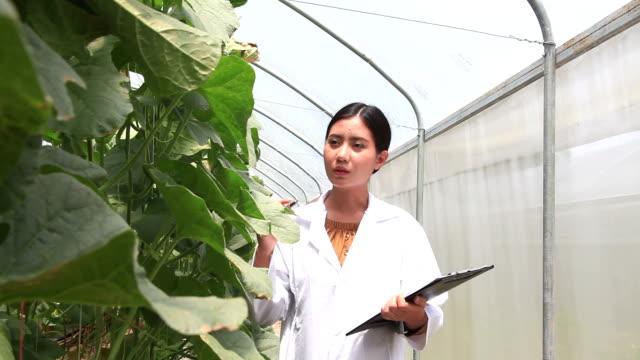 araştırmacı veya tarım müfettişi - plant stem stok videoları ve detay görüntü çekimi