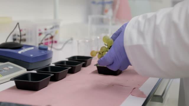 vídeos de stock, filmes e b-roll de pesquisador, preparando as uvas para a pesquisa - amostra científica