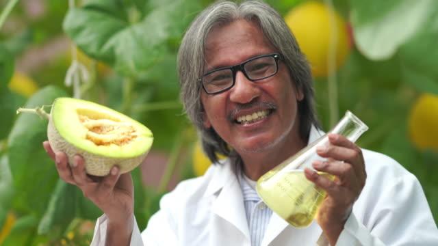 vídeos de stock, filmes e b-roll de pesquisadores testaram doçura das variedades de culturas de melão para pesquisa e desenvolvimento, alimentos ogm, conceito de bioalimento - provando usando a boca