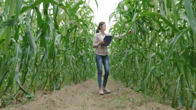 リサーチ担当者 - 収穫点の映像素材/bロール