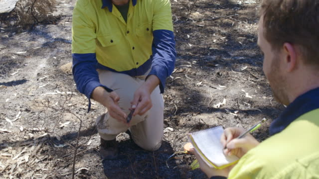 Researching Wood in the Forest
