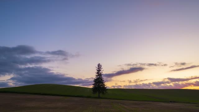4k upplösning tidsfördröjning av den ikoniska ensam julgran på fältet i biei, hokkaido, japan - hokkaido bildbanksvideor och videomaterial från bakom kulisserna