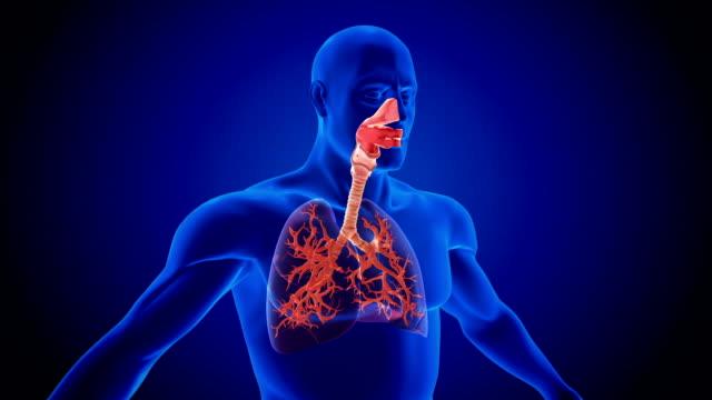 respiratory system - część ciała zwierzęcia filmów i materiałów b-roll