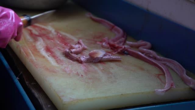 4K Restaurant prepping kkomjangeo, knife cut and remove skin off a live eel