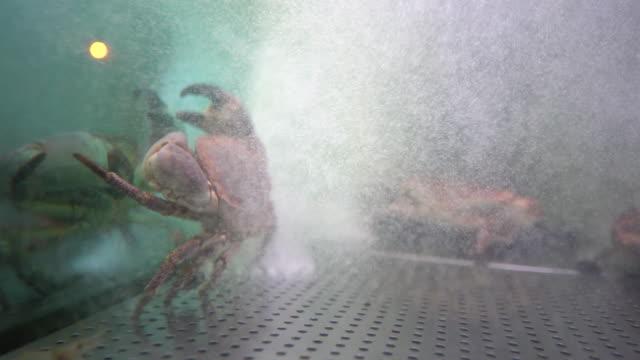 restaurant sea food crab
