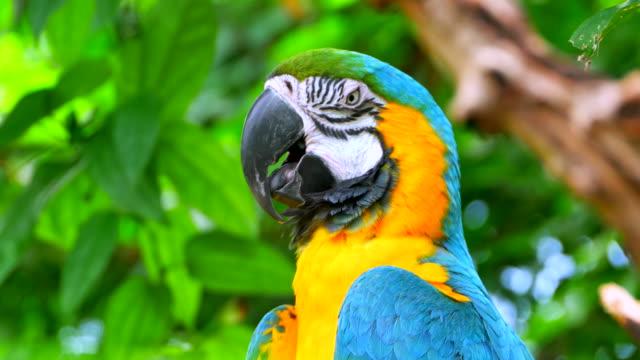 resting macaw parrot, closed eyes, sleeping on jungle branch - ultra high definition television filmów i materiałów b-roll