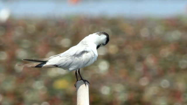 resting seagull on the pole video