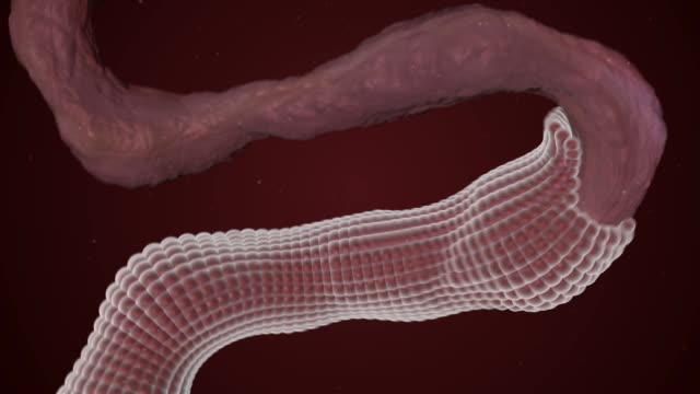 restoration of the surface of the damaged nerve or intestines - collagene video stock e b–roll