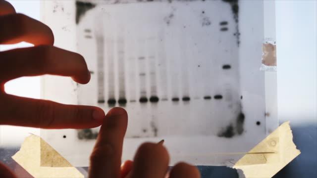 dna result research: science medical research - генетическое исследование стоковые видео и кадры b-roll