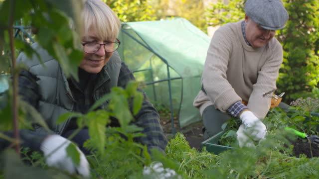 vídeos de stock, filmes e b-roll de pares caucasianos aposentados que trabalham junto na colocação - jardinagem