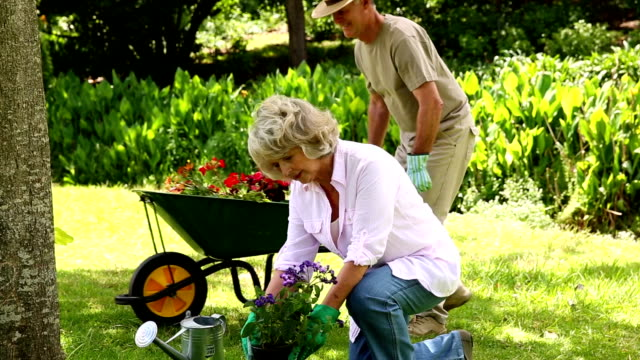 Retired couple gardening together Retired couple gardening together at home in the garden horticulture stock videos & royalty-free footage
