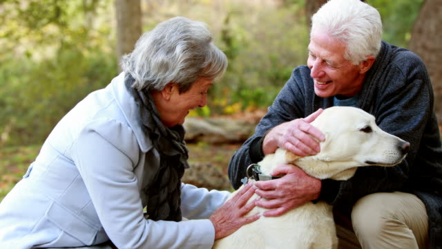 Retired couple with their dog video