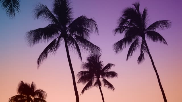 Retro Hawaii Palms At Sunset