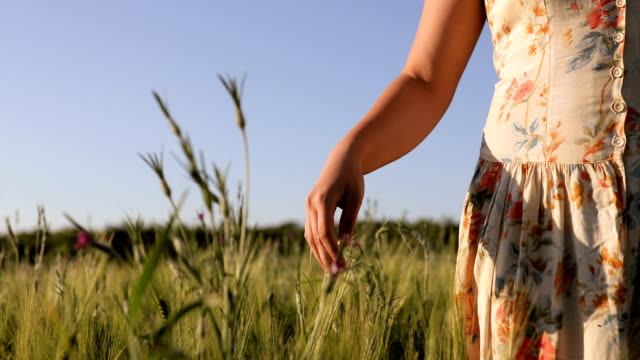 Retro woman walking in green field of wheat at sunset video