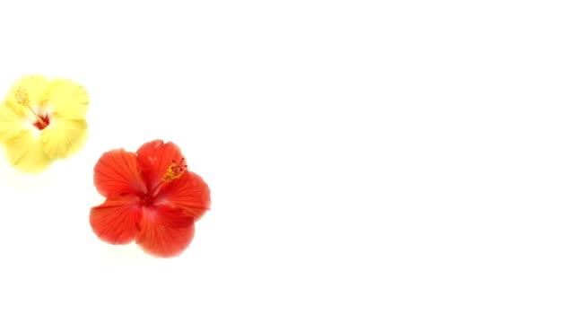 Revolving Flowers video