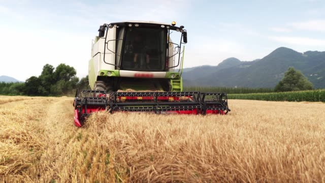 Revolving reel of a combine head video