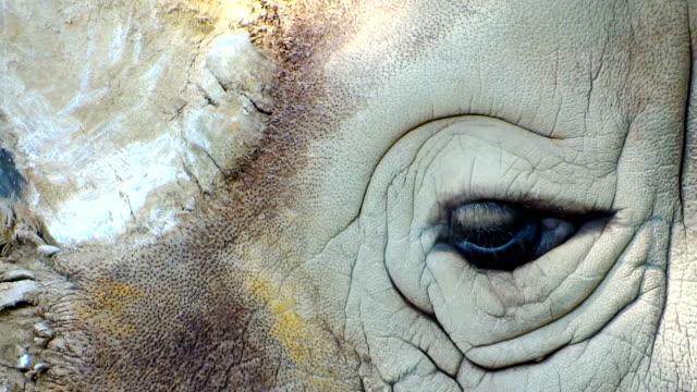 rhino close up - utdöd bildbanksvideor och videomaterial från bakom kulisserna