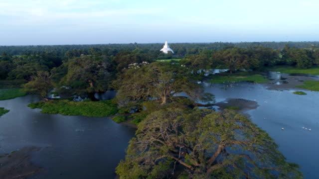 vidéos et rushes de champ et le temple bouddhiste de riz: 4k - sri lanka