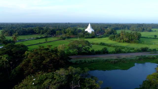pirinç alan ve budist tapınağı: 4k - stupa stok videoları ve detay görüntü çekimi