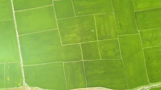 田んぼと川アジア村空撮。ドローン ビュー緑米のプランテーション。農業や穀物業界。農業と農業の概念。上から自然の風景 - インドネシア点の映像素材/bロール