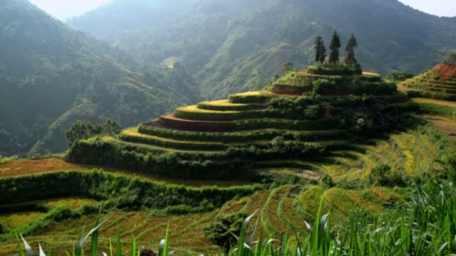 Rice field on Terraces on mountains beautiful shape in nature, North of Vietnam. Rice field on Terraces on mountains beautiful shape in nature, North of Vietnam. sa pa stock videos & royalty-free footage
