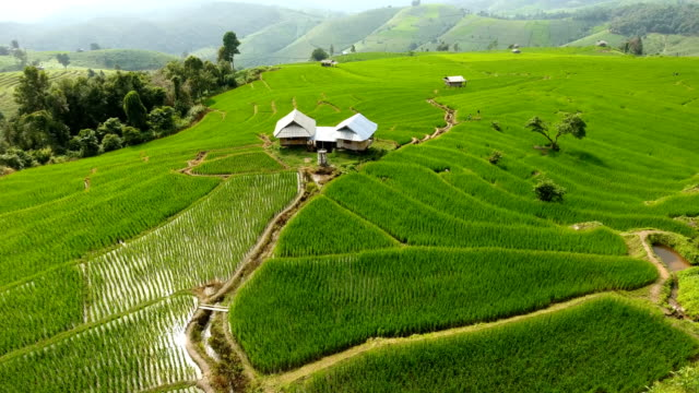 rice field terrace on mountain agriculture land. - cambogia video stock e b–roll