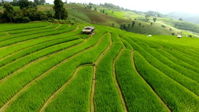 Terraza de campo de arroz en tierras de agricultura de montaña. - vídeo