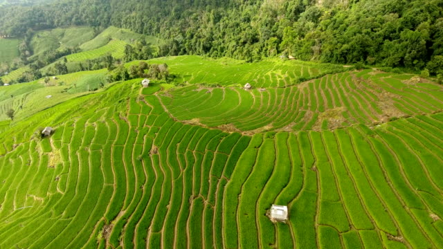 Rice field terrace on mountain agriculture land. Asian rice field terrace on mountain side, lush agriculture land. Rice is the staple food of Asia and part of Pacific. Over 90 percent of the world's rice is produced and consumed in the Asia-Pacific. rice paddy stock videos & royalty-free footage