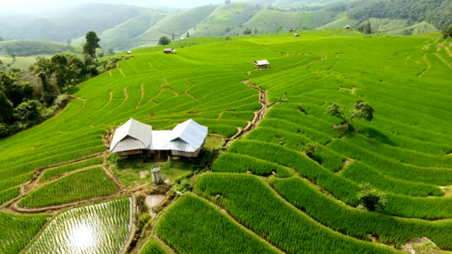 rice field terrace on mountain agriculture land. - индонезия стоковые видео и кадры b-roll
