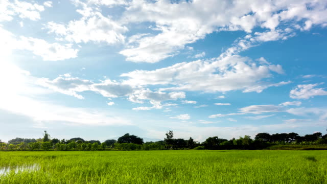 美しい空と田んぼ。 - 水田点の映像素材/bロール