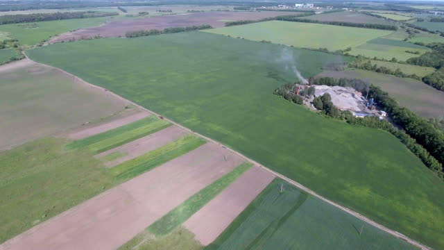 Rice field with yellowish green grass. Aerial view. 4K video. - vídeo