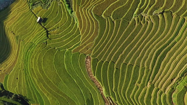 reisfelder auf reihenhaus auf terrassierten reisfeld yenbai vietnam.beautiful in der erntesaison am mu cang chai - reisterrasse stock-videos und b-roll-filmmaterial
