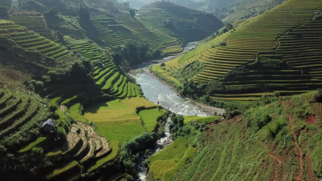 Rice fields on terraced at YenBai Vietnam.Beautiful terraced rice field in harvest season at Mu Cang Chai Rice fields on terraced at YenBai Vietnam.Beautiful terraced rice field in harvest season at Mu Cang Chai sa pa stock videos & royalty-free footage