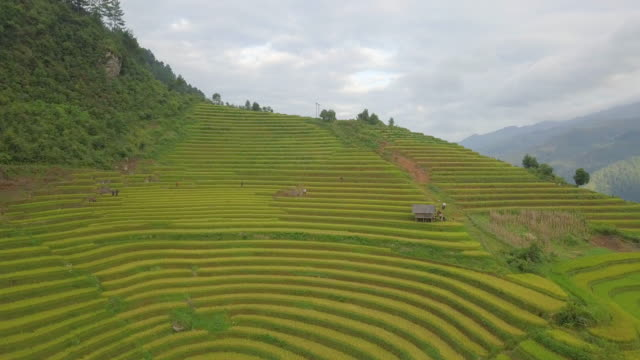 rice fields on terraced of mu cang chai, yenbai, vietnam - taras ryżowy filmów i materiałów b-roll