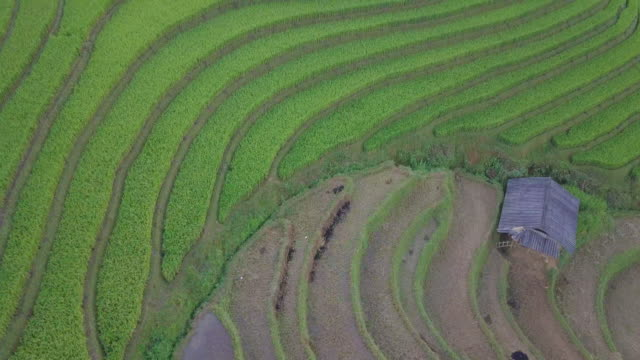 rice fields on terraced of mu cang chai, yenbai, vietnam - orticoltura video stock e b–roll