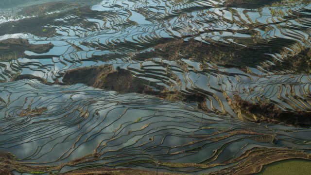 Rice fields on terraced of yuanyang,china. video